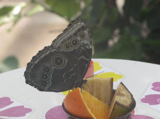 Natureland Seal Sanctuary: Butterfly House