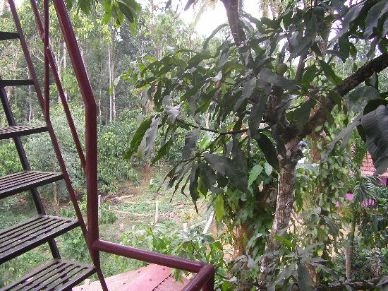 GreenLeaves Habitat: Grean Leaves habitat, garden view, full of green leaves