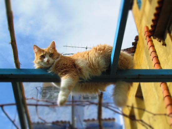 Hotel Molino: Cool cat !