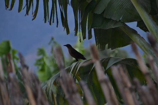 Mikaso Hotel Resto: birds arpund hotel