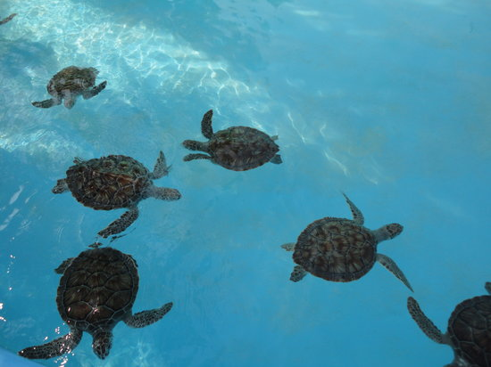 Sea Turtle Hatchery