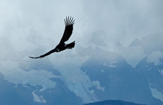 The Condors Nests : Condor