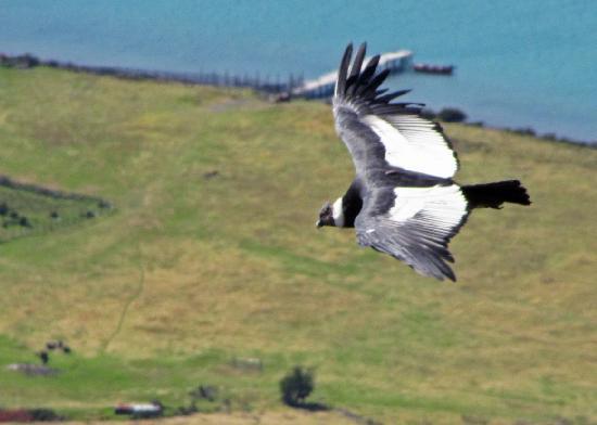 The Condors Nests: Condor