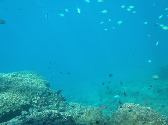 Manava Beach Resort & Spa - Moorea: Quelques rencontres