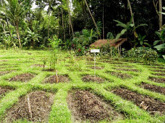 Jiwa Damai Organic Garden & Retreat: Organic farming on Bali_Jiwa Damai