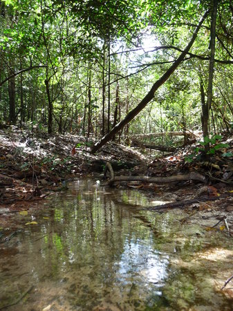 Brasil: Jungle