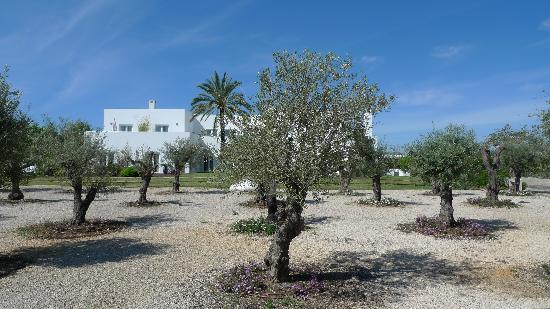 Vilacampina Guesthouse: Vilacampina viewed from the olive grove