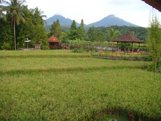 Munduk, Indonezja: vu du bungalow