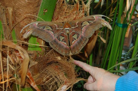 "Wings of Wonder: This moth was ""hiding in plain sight"""