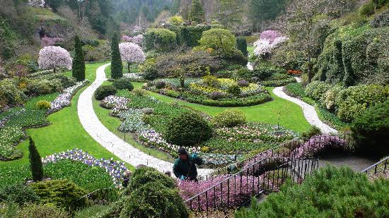 The Butchart Gardens: Hyacinths rule in the Sunken Garden