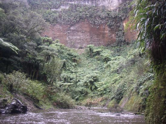 Spirit of the River Jet - Whanganui River: Majestic Mangaio Gorge