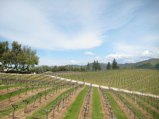 Placerville, Καλιφόρνια: Gold Hill Vineyard