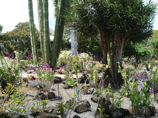 Koloa Heritage Trail : Moir Gardens