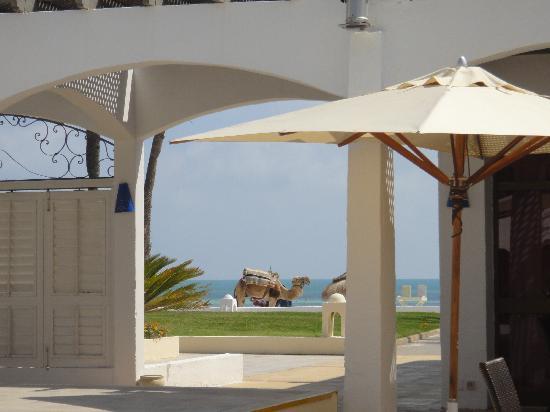 Club Med Djerba la Douce: vu de la piscine