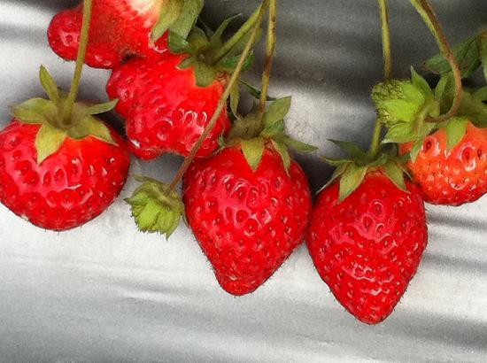 Chun Hsiang Strawberry Farm : Sweet taste even late in season