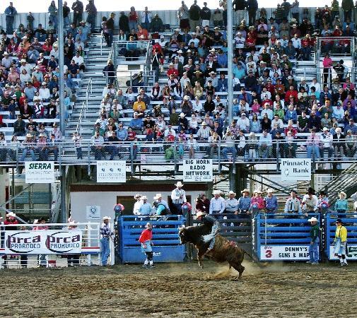 Buffalo Bill Cody Stampede Rodeo : Cody Night Rodeo