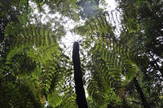 Real Sydney Tours : Wentworth Falls