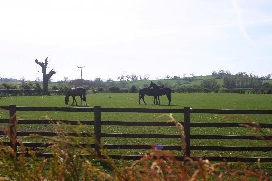 Thornton Lodge Farm B&B: View from the garden