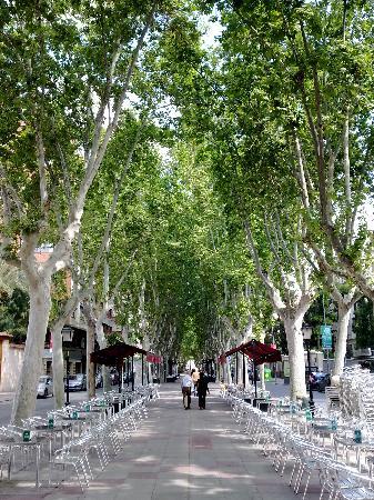 Murcia y sus refrescantes arboladas