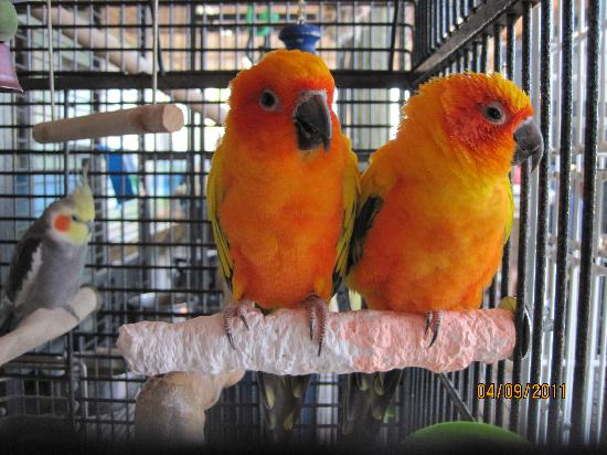 AirBoat Rides at Midway : Beautiful birds in the gift shop