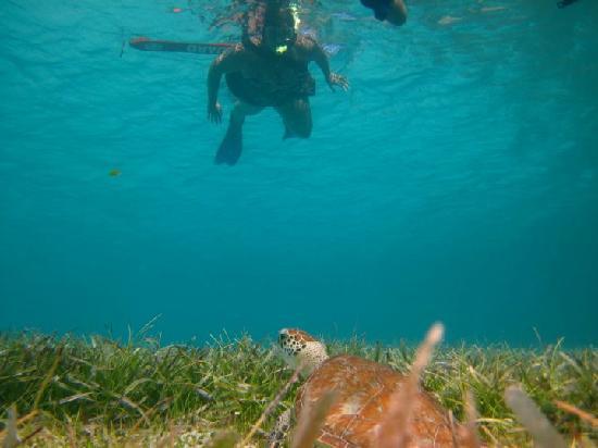 Kayaking Puerto Rico : tortugas