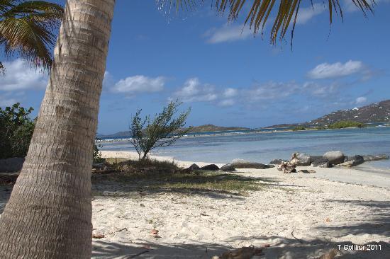 Surfsong Villa Resort: THE BEACH