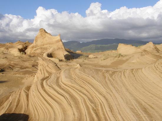 Sandtrails Hokianga