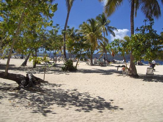 Grand Bahia Principe Cayacoa : beautiful beach on bacardi island