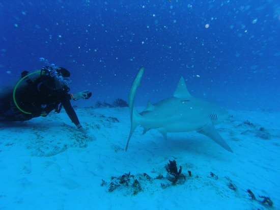 Phantom Divers: Great place for taking pictures