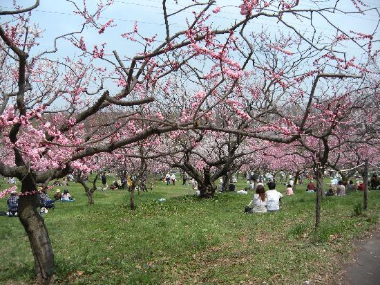 Sapporo, Japan: 札幌市平岡梅園