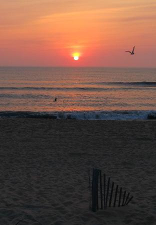 Quality Inn Carolina Oceanfront: I took this shot at dawn at the beach behind the Quality Inn.