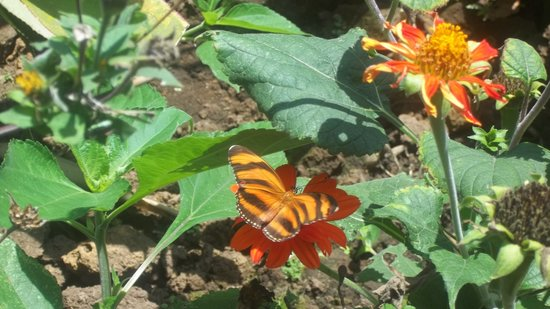 Spirogyra Butterfly Garden (San Jose)   All You Need To Know Before You Go  (with Photos)   TripAdvisor