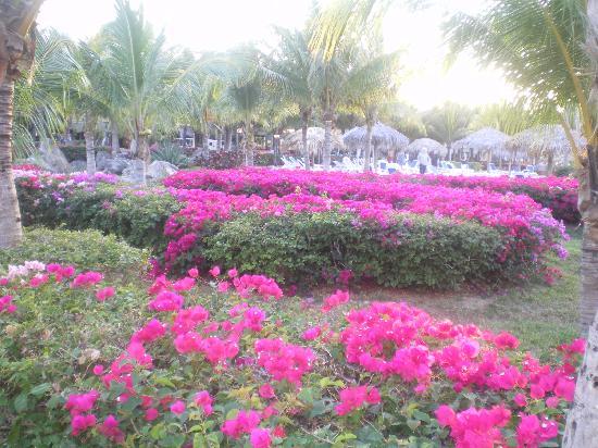 Melia Cayo Santa Maria: beaux jardins