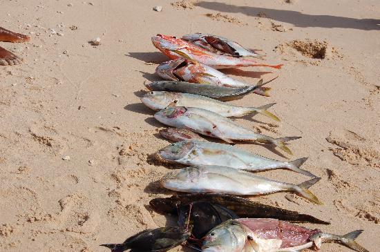 Mahajanga, Madagascar: retour de pêche