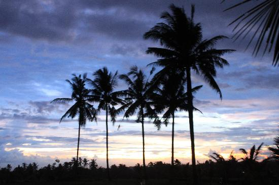 Nirwa Ubud Homestay : View over paddies in evening