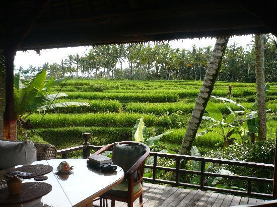 Villa Orchid Bali: Direkt an den Reisterrassen in der Idylle