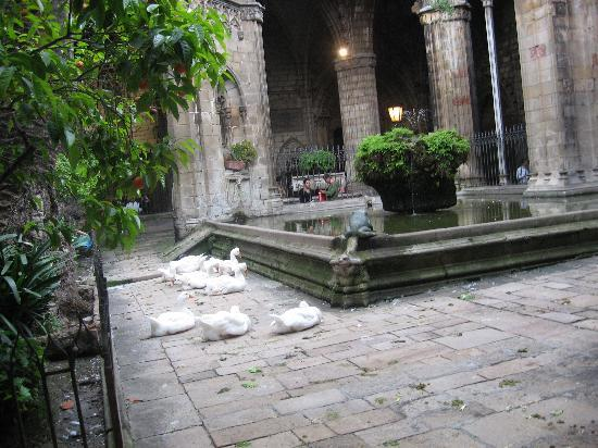 Barcelona, Hiszpania: Chiostro cattedrale sant'Elulalia
