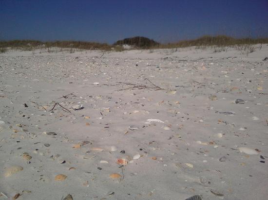 Shells - St. Joseph Peninsula State Park