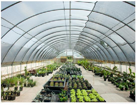 Greenhouse picture of peckerwood garden hempstead for Better homes and gardens greenhouse