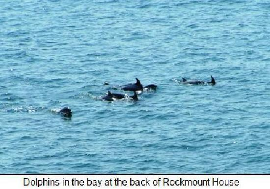 dolphins swimming in the bay behind rockmount House