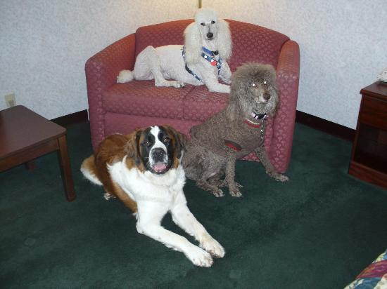 Days Inn Battlefield Rd/Hwy 65: Pet Lover's Welcomed