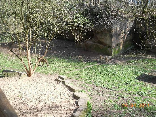 Nuremberg Zoo: Pic 2
