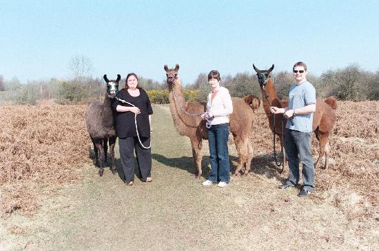 Hereford, UK: Llama Trek with Golden Valley Llamas