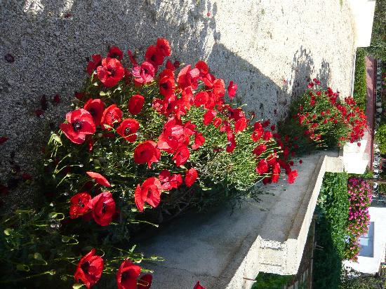 Cephalonia, Greece: I love poppy's