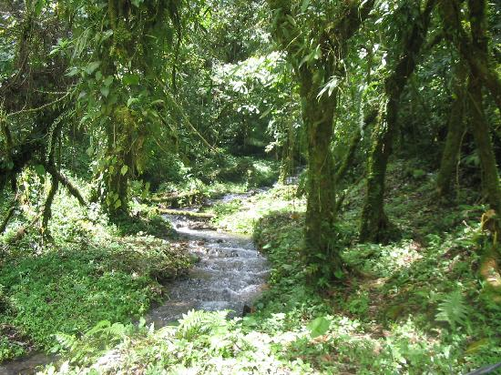 Boquete Garden Inn: Stream along a mountain walking path