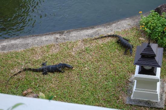 Rawi Warin Resort & Spa: The monitor lizards that live at the lake of the hotel