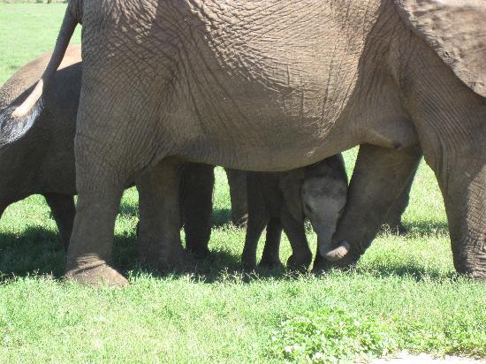 Schotia Safaris Private Game Reserve: Elefantenbaby