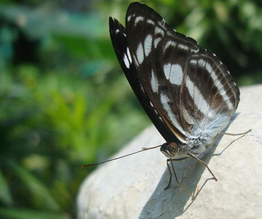 Kuala Lumpur Butterfly Park: Plenty of different types of butterflies.