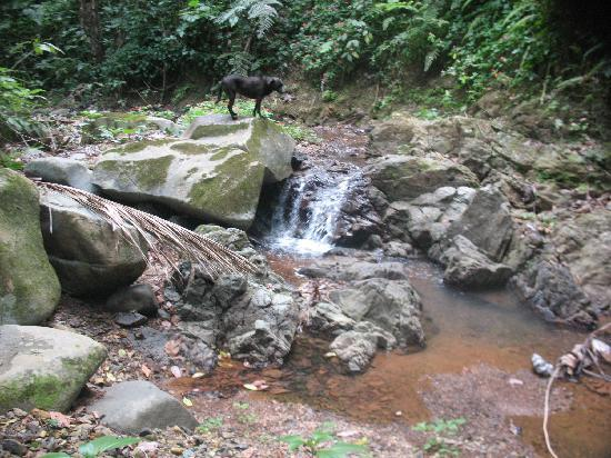 Las Marias, Puerto Rico: Waterfall on property, with Pony Boy