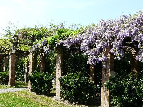 Chateau Belle Epoque : Glycine dans le parc